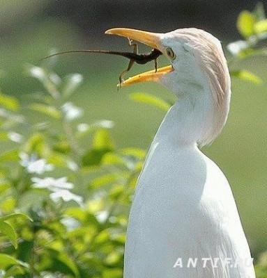1215263069_never-give-up-food-fight-birds-lizards_big.jpg