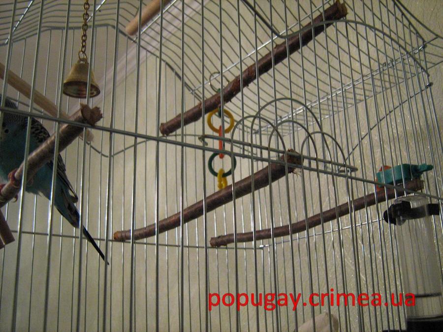 Как сделать жердочки для попугаев 961