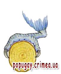 http://popugay.crimea.ua/img/lapa.jpg