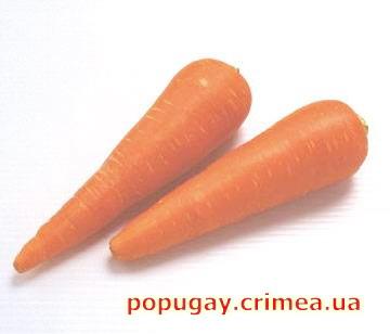 морковь для снижения холестерина