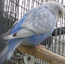 глисты от попугаев может быть