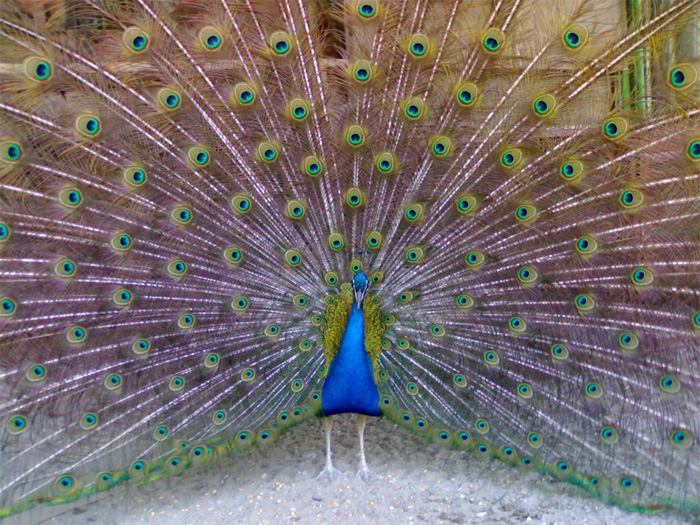 перья птиц фото