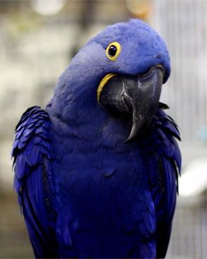 глисты от попугаев к человеку