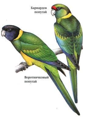 глисты от попугаев